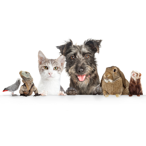 Variety of companion animals pictured in a row